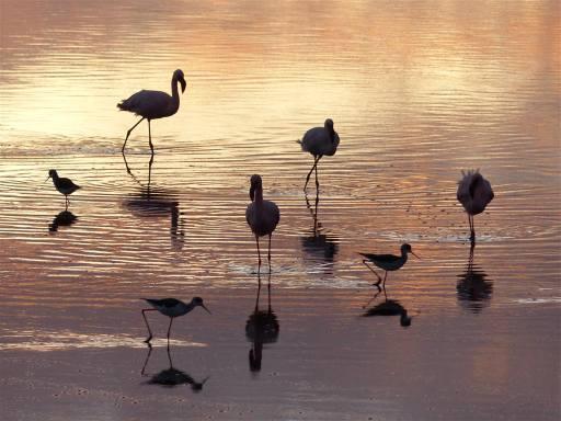 Lake Ndutu birds