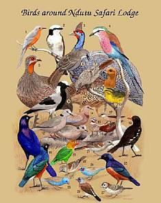Ndutu birds
